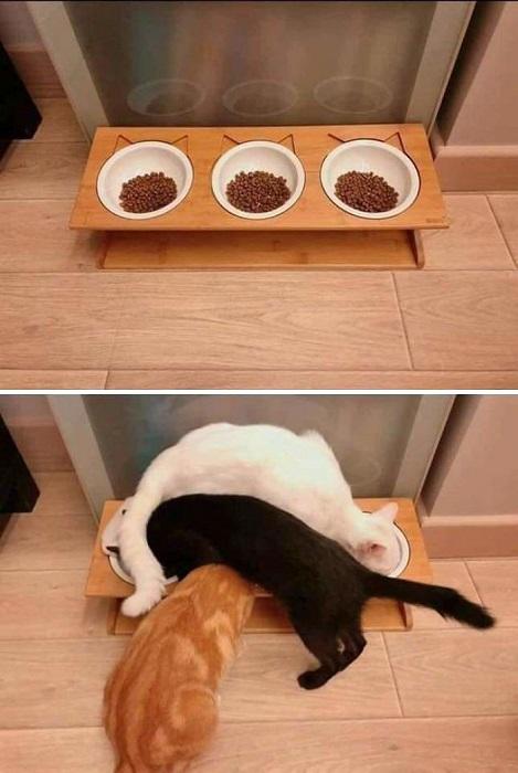 Угадай, кто из какой миски ест?