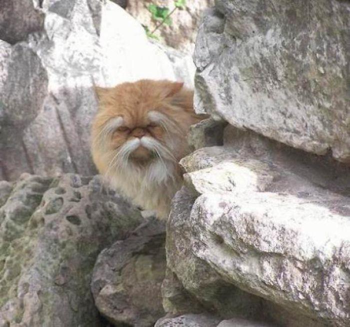 Великолепный представитель семейства кошачьих.