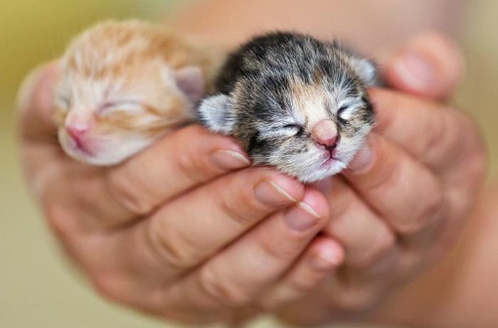 Маленькие детёныши - удивительные котята.