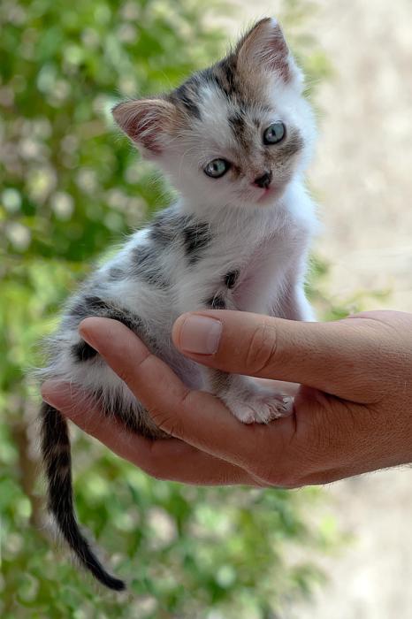 Маленькая красивая мордашка.