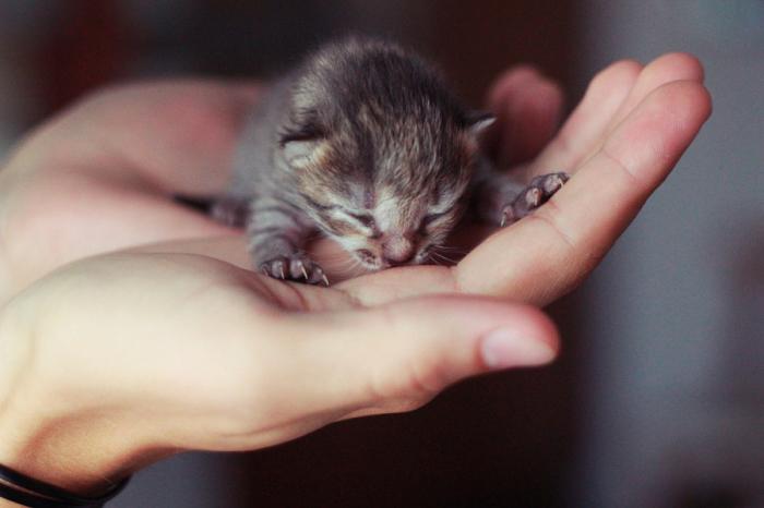 Маленький котёнок с большими коготками.