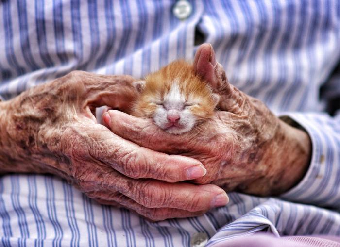 Котёнок, нашедший тепло и ласку в человеке, который готов дать ему свою любовь.
