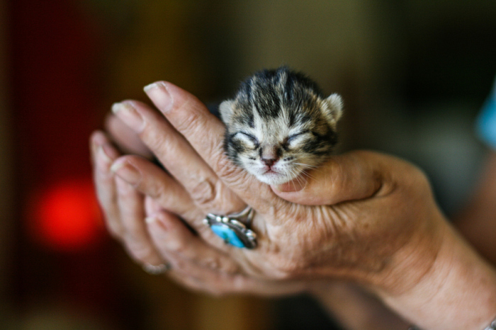 Тёплые руки, подающие надежду...