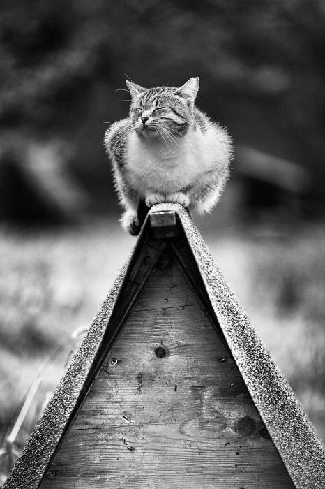 Итальянский фотограф Сабрина Боэм обожает кошек, поэтому четвероногие любимцы чаще всего становятся главными героями замечательные снимков.