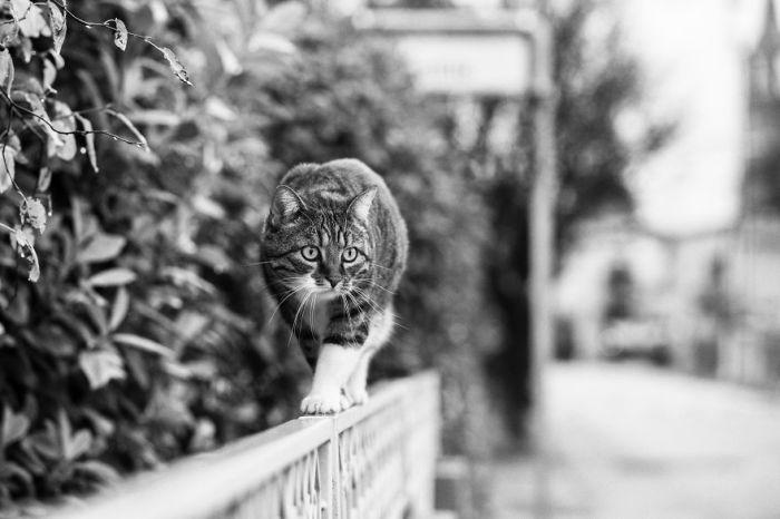 На некоторых снимках итальянский фотограф запечатлела и своих любимых домашних питомцев – кошек Сисси и Рикки.