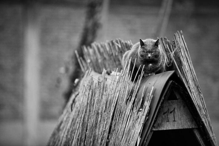 К кошкам редко удается подойти незаметно, поэтому очень часто модели «награждают» фотографа Сабрину Боэм вот таким взглядом.
