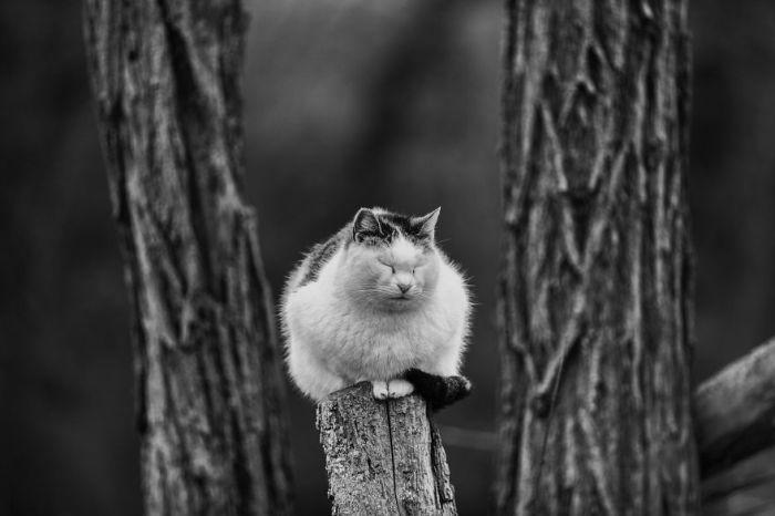 На своих снимках Сабрина Боэм старается запечатлеть кошек в их привычном образе жизни, что делает фотографии еще более выразительными.