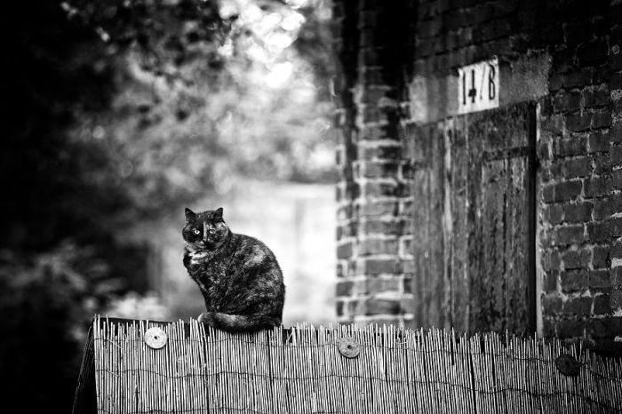 Сабрина фотографирует кошек уже на протяжении 6-ти лет, но они до сих пор не устают ее удивлять.