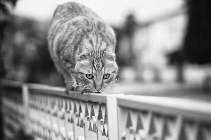 Фотограф считает, что чаще всего кошачья логика совершенно не поддается правильному человеческому пониманию.
