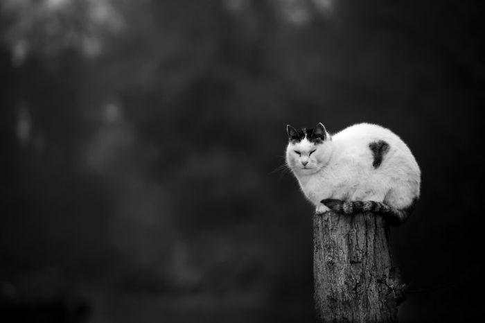 Как может быть удобно спать на старом высоком пне, где еле хватает места для всех четырех кошачьих лап?