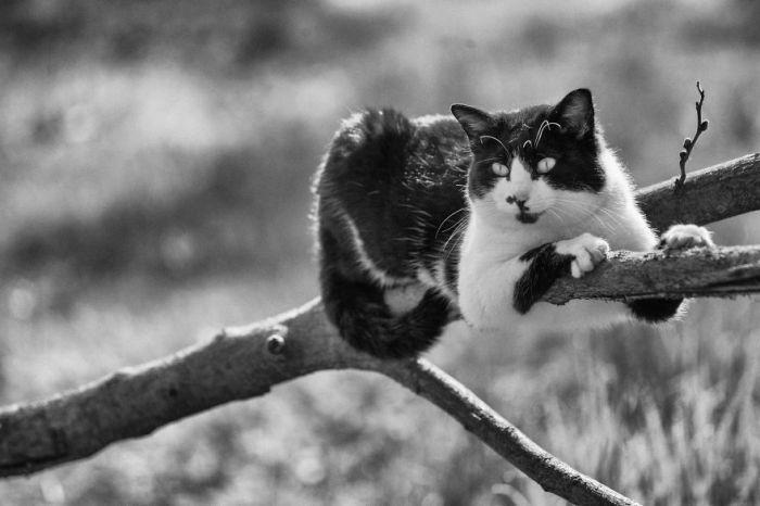Или греться на солнышке, вцепившись когтями в кору тоненькой веточки дерева ни на мгновенье не забывая о поддержании баланса?