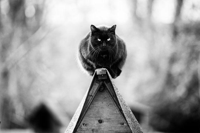 Видимо неудобные и труднодоступные места обладают какой-то необъяснимой притягательностью для представителей кошачьего семейства.
