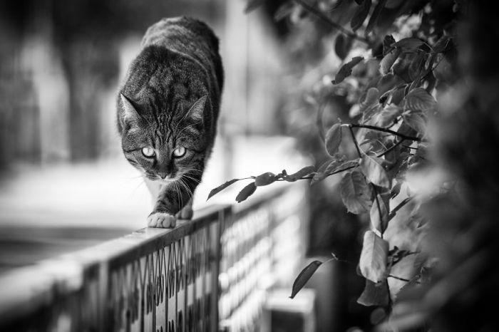 Итальянский фотограф сделала собственную подборку «монорельсовых» котов, которые любят уединение и странные места для времяпровождения.