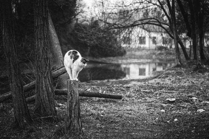 Героями эффектных монохромных фотографий Сабрины Боэм стали как домашние, так и бездомные уличные коты.