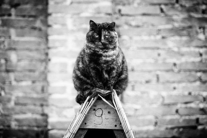 Большинство котов, представленных в фотоподборке, облюбовали крыши собачьих будок, нимало не смущаясь шумным соседством.