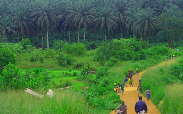 «Живи быстро, умри молодым» — это про Сьерра-Леоне, где мужчины и женщины еле-еле дотягивают до 48 лет.