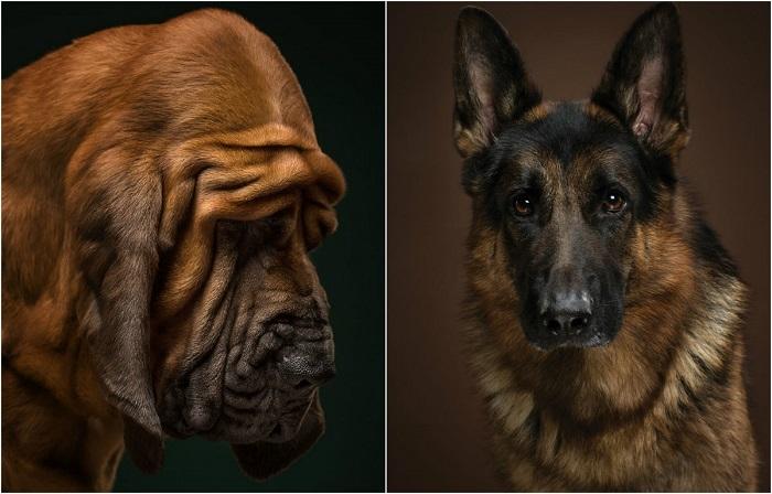 Проект «The Dog Show» - проект, посвящённы собакам разных пород.