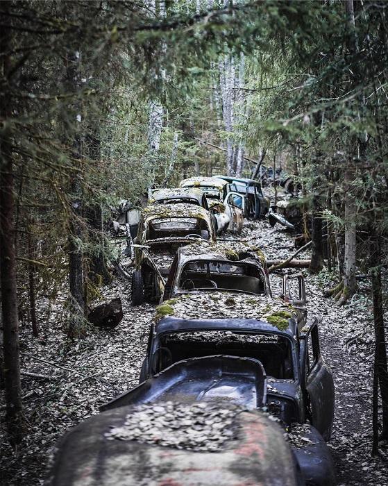 Колонна старинных ржавеющих автомобилей среди деревьев, найденная фотографом в Швеции.