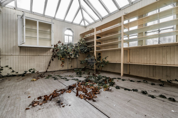 Одна из комнат покинутого госпиталя в Великобритании стала своеобразным домом для дикого винограда.