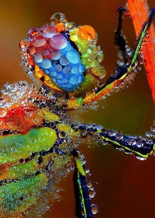 Сказочно-красивая стрекоза, случайно попавшая под дождик.