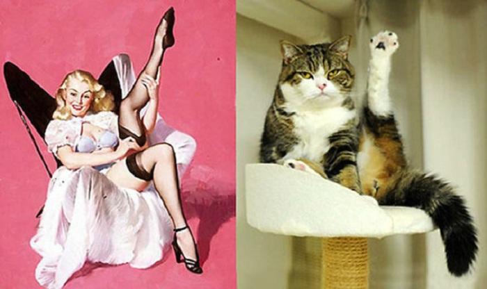 Изображение кота не располагает флиртовать ни с кем.