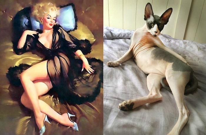 Гламурные кошки, ставшие прототипами сексуальных девушек в стиле Pin-Up.
