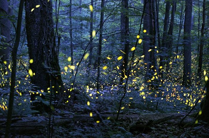 Волшебное природное явление. Фотограф: Радим Шрайбер (Radim Schreiber).