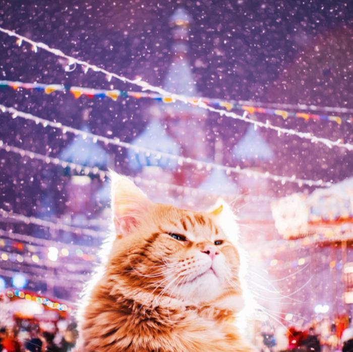 Кота, который носит гордое имя Котриарх.