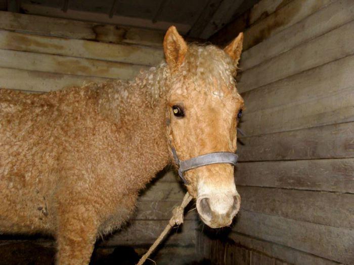 Лошади, неприхотливые к еде и содержанию.