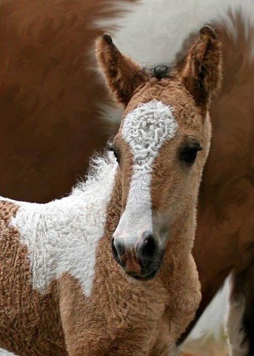 Эти лошади хорошо передвигаются по пересеченной местности и горам, хороши в хозяйственных работах и прекрасно подходят для конных шоу, иппотерапии, конного туризма и детского спорта.