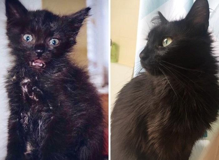 Через год котенок, которого нашли на стройке, превратился в этого красавца.