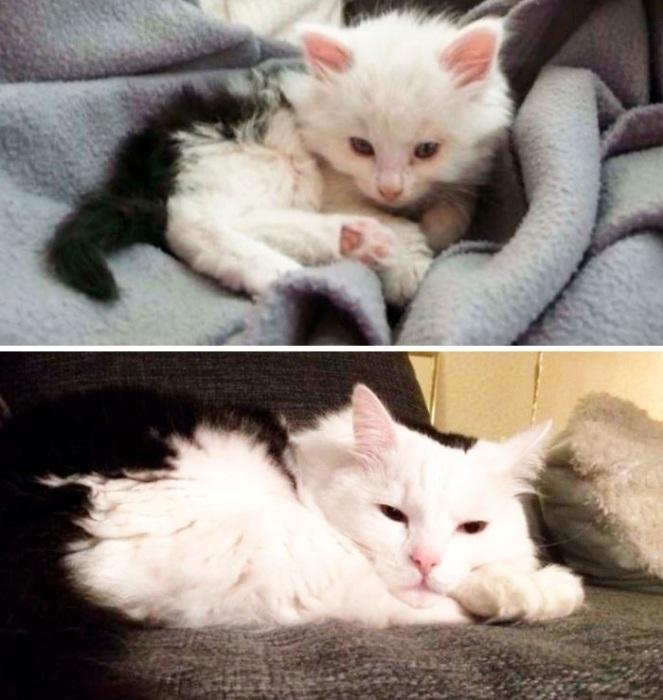 «Нашел этого котенка на автостоянке 8 лет назад».