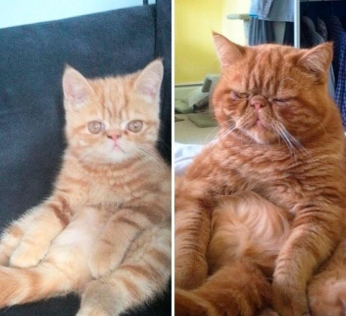 Неторопливый котенок превратился в рыжего лентяя, который все так же… никуда не спешит!