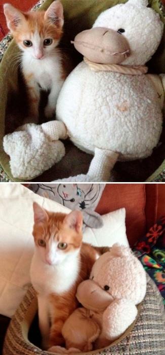 Тедди со своей уткой – разница между фотографиями 2 года.