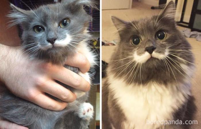 Знаменитый кот-хипстер Гамильтон.