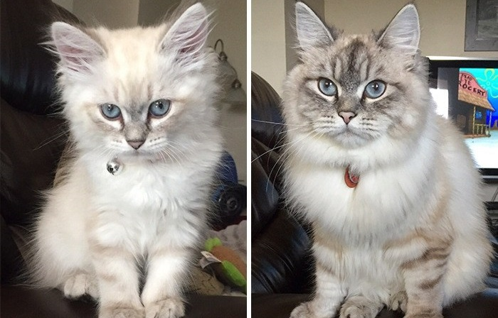 Фотографии котят, ставших с возрастом еще милее.