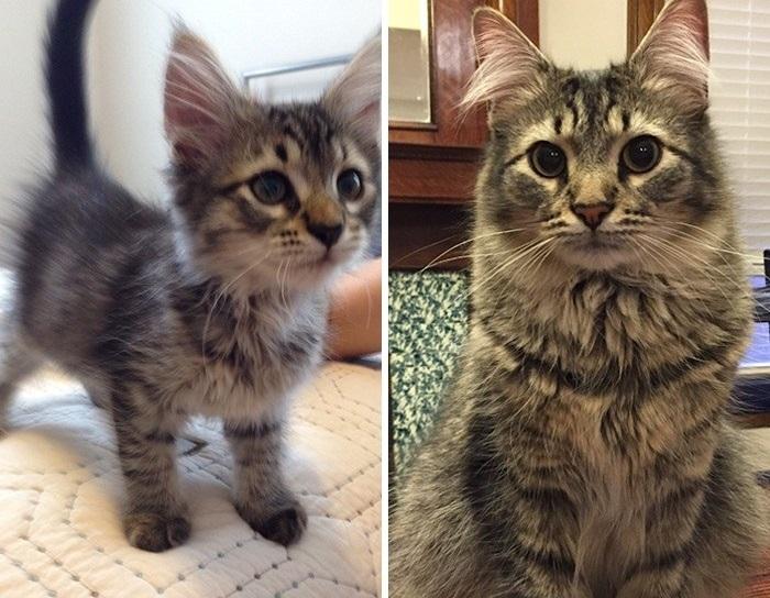 «Мой котенок год спустя».