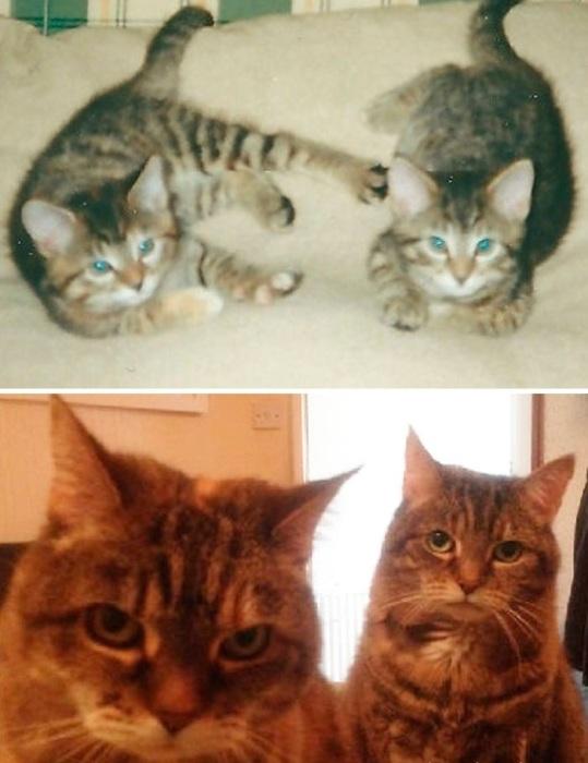 Взрослые Биг и Джинджи всегда на страже порядка в хозяйском доме.