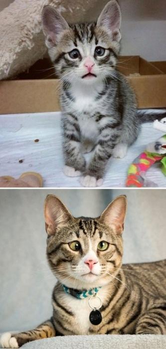 Котенок вырос, но даже небольшой недостаток не сделал его хуже.
