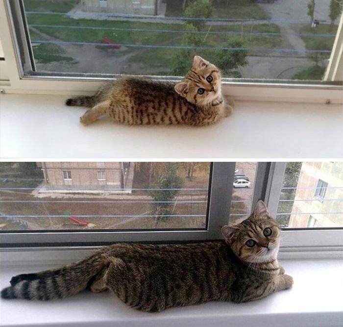 «Наш котик вырос так быстро!»