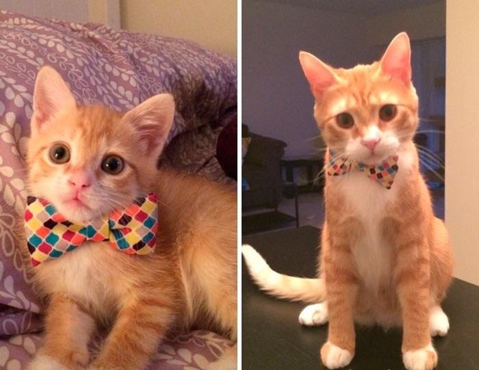 Рыжий котенок как-то незаметно вырос в изящного взрослого кота.