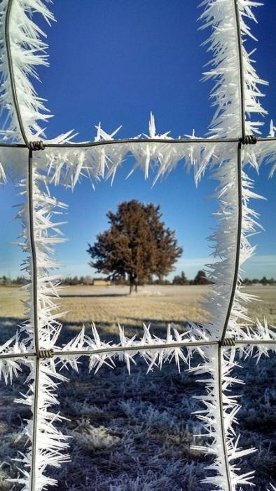 Дополнительная защита, созданная природой. | Фото: metdaan.com