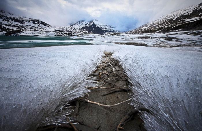Колючее покрывало из трав открывает проход на другую сторону. Автор фотографии: Luca Biolcati Rinaldi.