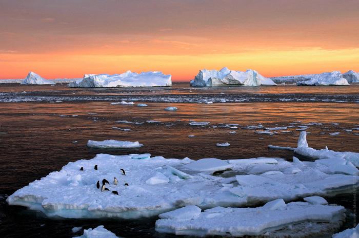 Тающие льдины около французской научной станции Дюмон-Дюрвиль, которая находится в Восточной Антарктиде.