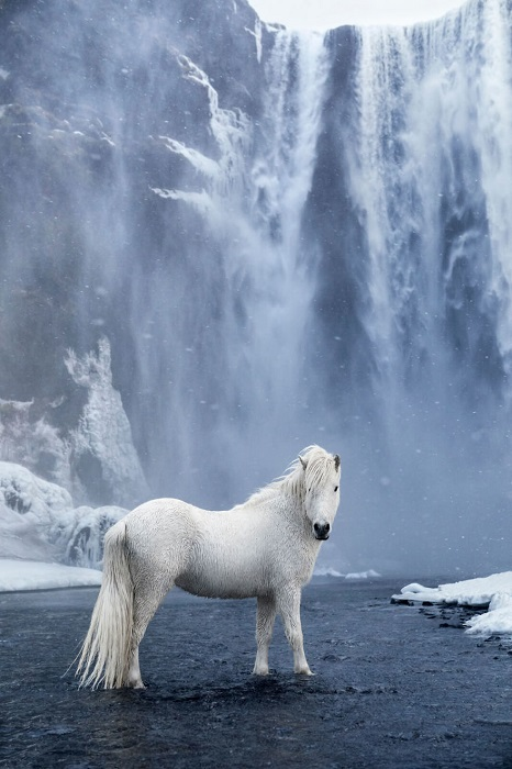 Фотограф и кинематографист Дрю Доггет (Drew Doggett) создал захватывающую серию снимков об исландских лошадях.