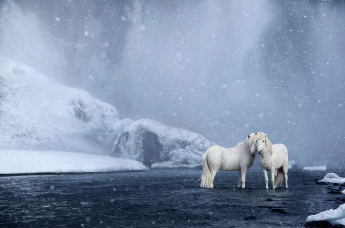Эти сильные и выносливые животные круглый год живут под ветром, дождем и снегом.