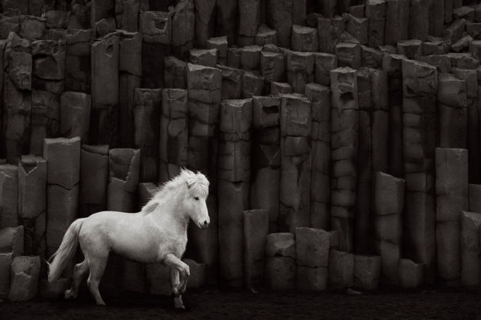 Тем не менее, фотографу Дрю Доггету все же пришлось столкнуться с привычными трудностями, которые возникают при съемке животных.