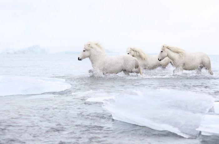 Своей сказочно-снежной серии фотографий Дрю Доггет дал название - «В царстве легенд».