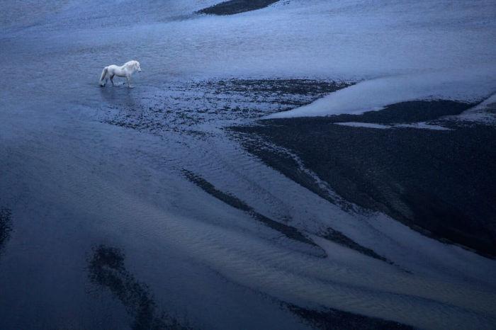 Белоснежная лошадь на фоне синей воды и черного вулканического песка в одном из уголков таинственной Исландии.