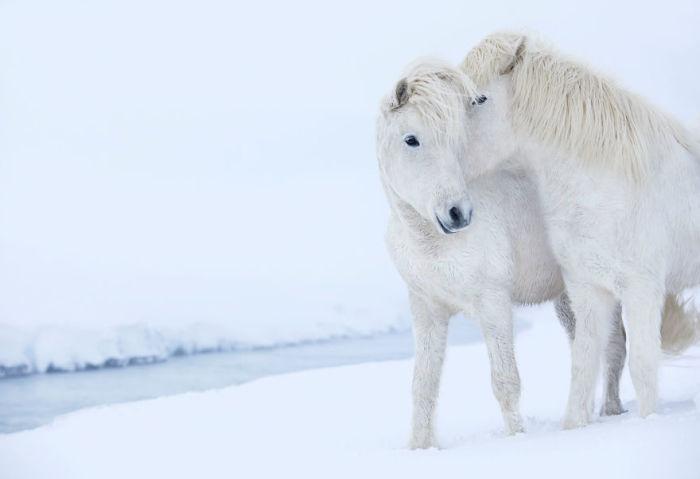 Дикие лошади, ледяные земли и великолепные пейзажи вошли в серию фотографий «В царстве легенд» нью-йоркского фотографа Дрю Доггета.